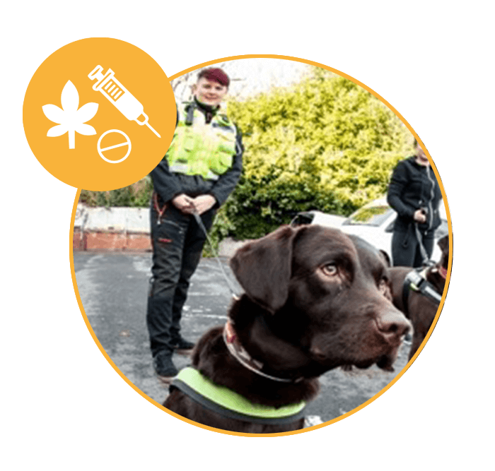 Specialised Detection dogs